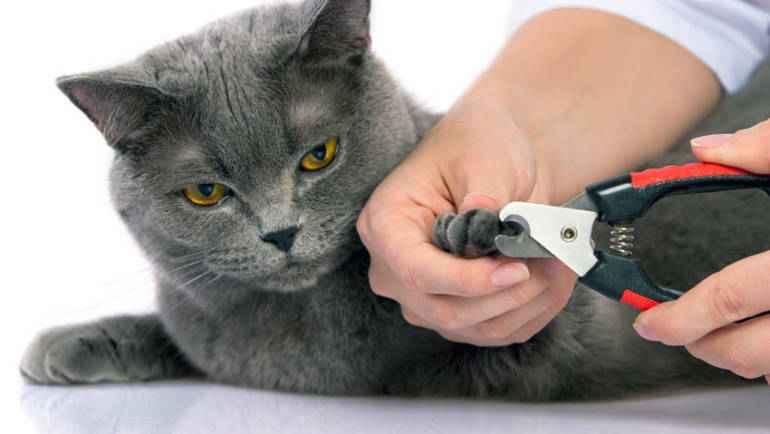 Рекомендации эксперта по уходу за когтями кота
