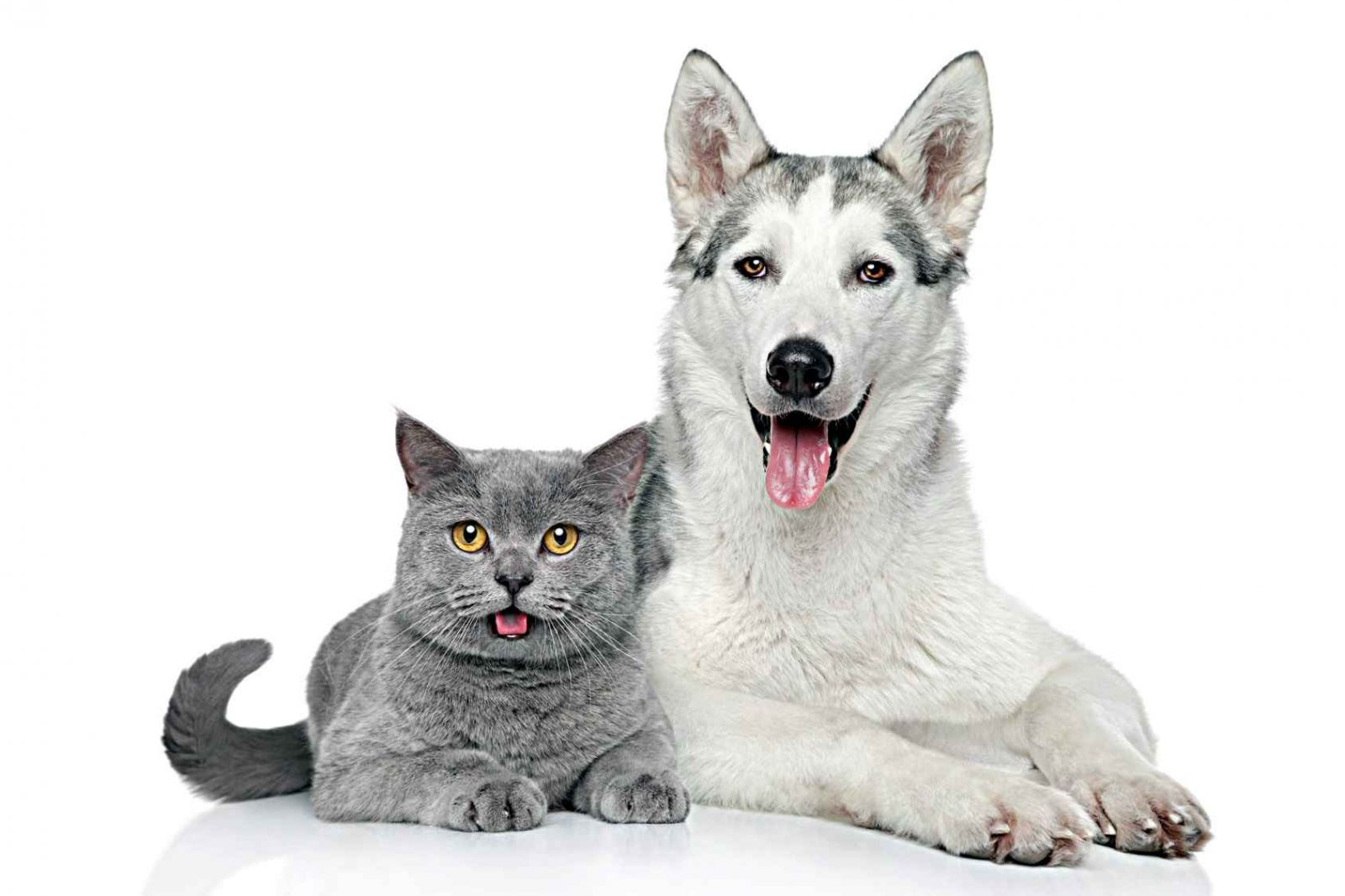 То, что вы могли не знать о когтях собак и котов