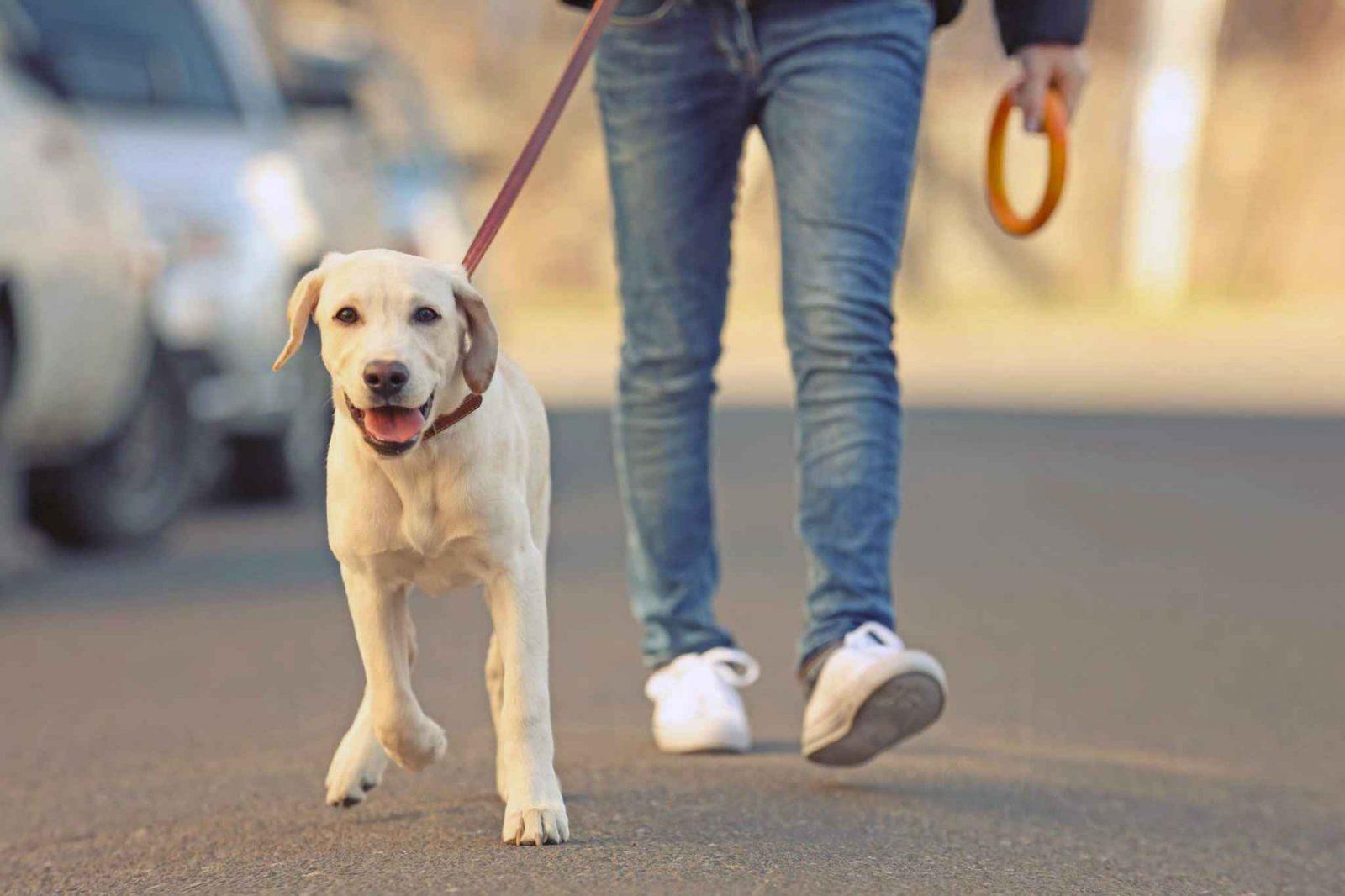 Топ 5 ошибок владельцев собак